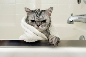 angry-cat-in-bath